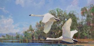 Andrew Peters Taking Flight cranes wildlife lake trees western landscape oil painting