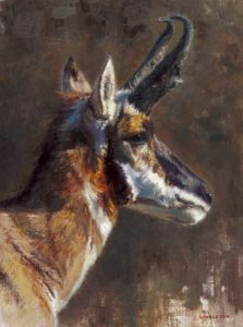 Kelly Singleton Pronghorn Study wildlife oil painting Briscoe Museum