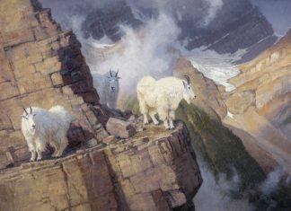"Ralph Oberg ""The Enlightened"" wildlife painting mountain goats"