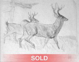 bob kuhn white tail bucks deer drawing wildlife forest