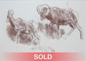 bob kuhn big horn study drawing wildlife rams