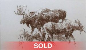 bob kuhn three moose study drawing wildlife