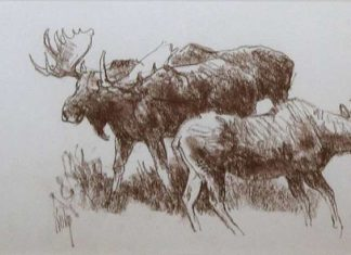 Bob Kuhn Three Moose Study wildlife drawing