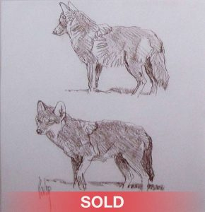 bob kuhn two coyotes drawing wildlife