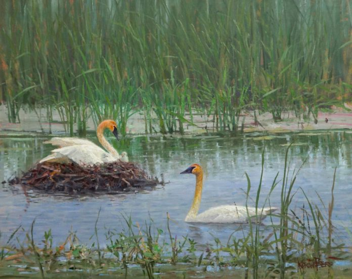 andrew peters wildland nativity geese nesting marsh lake wildlife oil painting prix de west exhibition