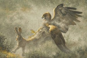 greg beecham feathers and dust rabbit hawk eagle wildlife oil painting