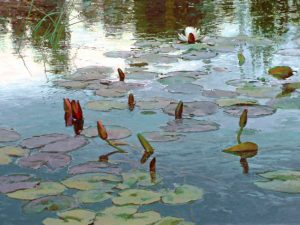 len chmiel an early bloomer lily pond lily pads water lake pond oil painting