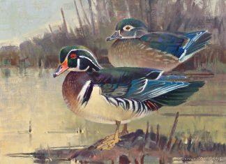 Jim Morgan Showtime ducks landscape wildlife oil painting