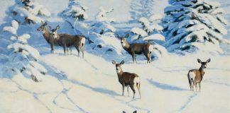 stephen elliott afternoon shadows deer whitetail snow wilderness landscape oil painting