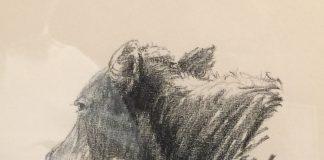 G. Harvey Cow Portrait #2 original drawing western painting bovine