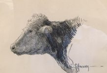 G. Harvey Cow Portrait drawing original western painting bovine