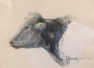 G. Harvey Cow Portrait drawing original western painting bovine