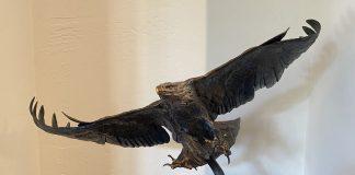 Ken Rowe Wind Storm eagle in flight wildlife bird bronze sculpture