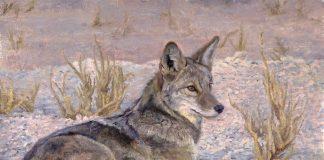 Kelly Singleton Desert Coyote wildlife oil painting
