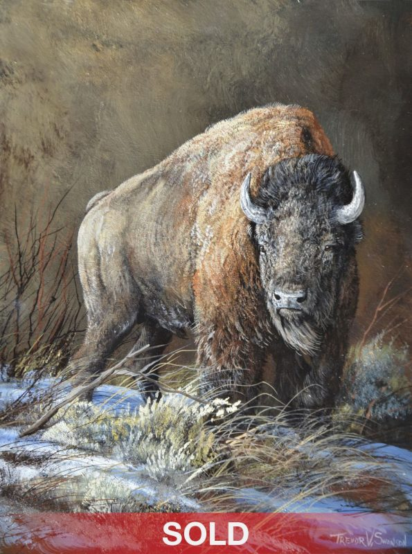 Trevor Swanson A Chill Wind buffalo bison wildlife oil painting Sold