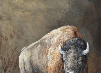 Trevor Swanson A Chill Wind buffalo bison wildlife oil painting