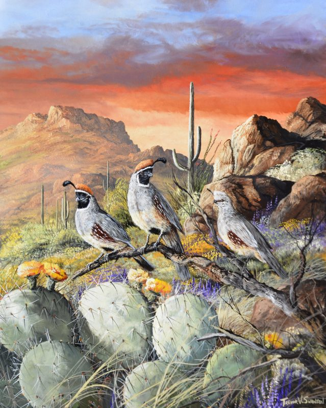 Trevor Swanson In A Glowing Sunset quail desert saguaro rocks mountain cacti prickly pear wildlife oil painting