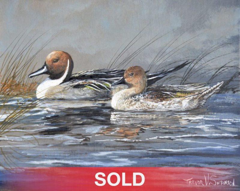 Trevor Swanson Quiet Morning Pair pintail ducks lake water stream wildlife oil painting sold
