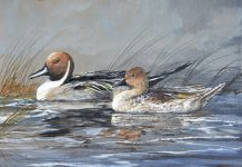Trevor Swanson Quiet Morning Pair pintail ducks lake water stream wildlife oil painting