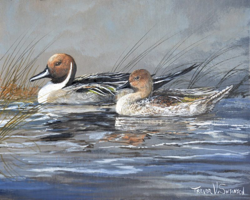 Trevor Swanson Quiet Morning Pair pintail ducks lake water stream wildlife oil painting
