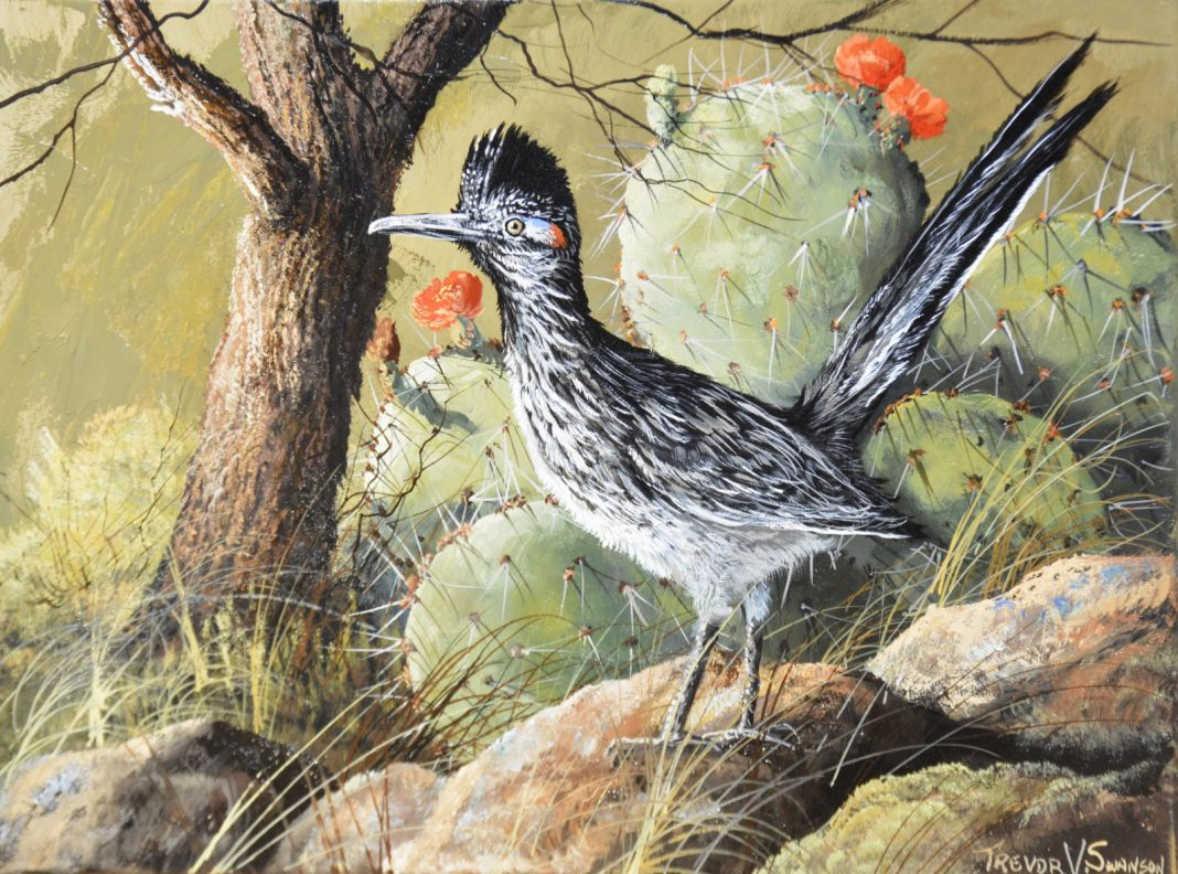 Trevor Swanson Sir Speedy roadrunner bird wildlife oil painting