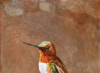 Trevor Swanson Thistel Stop hummingbird wildlife oil painting on copper