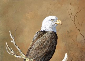 Trevor Swanson With A Commanding View eagle wildlife bald eagle America oil painting