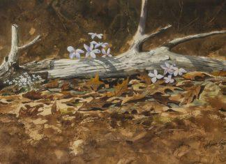 """Wayne Spradley - """"Rooster Heads"""""""