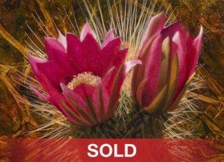 """John Cox - """"Cactus Blossom"""" desert flower cacti western oil painting"""