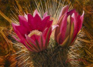 "John Cox - ""Cactus Blossom"""