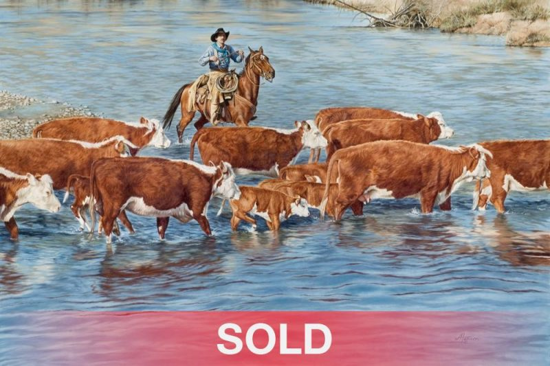 Ann Hanson Skinny Dippin cows cowboys horses equine water river western oil painting