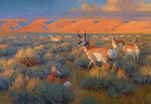 "Ralph Oberg ""Prairie Sundown"" pronghorn sunset wildlife oil painting"