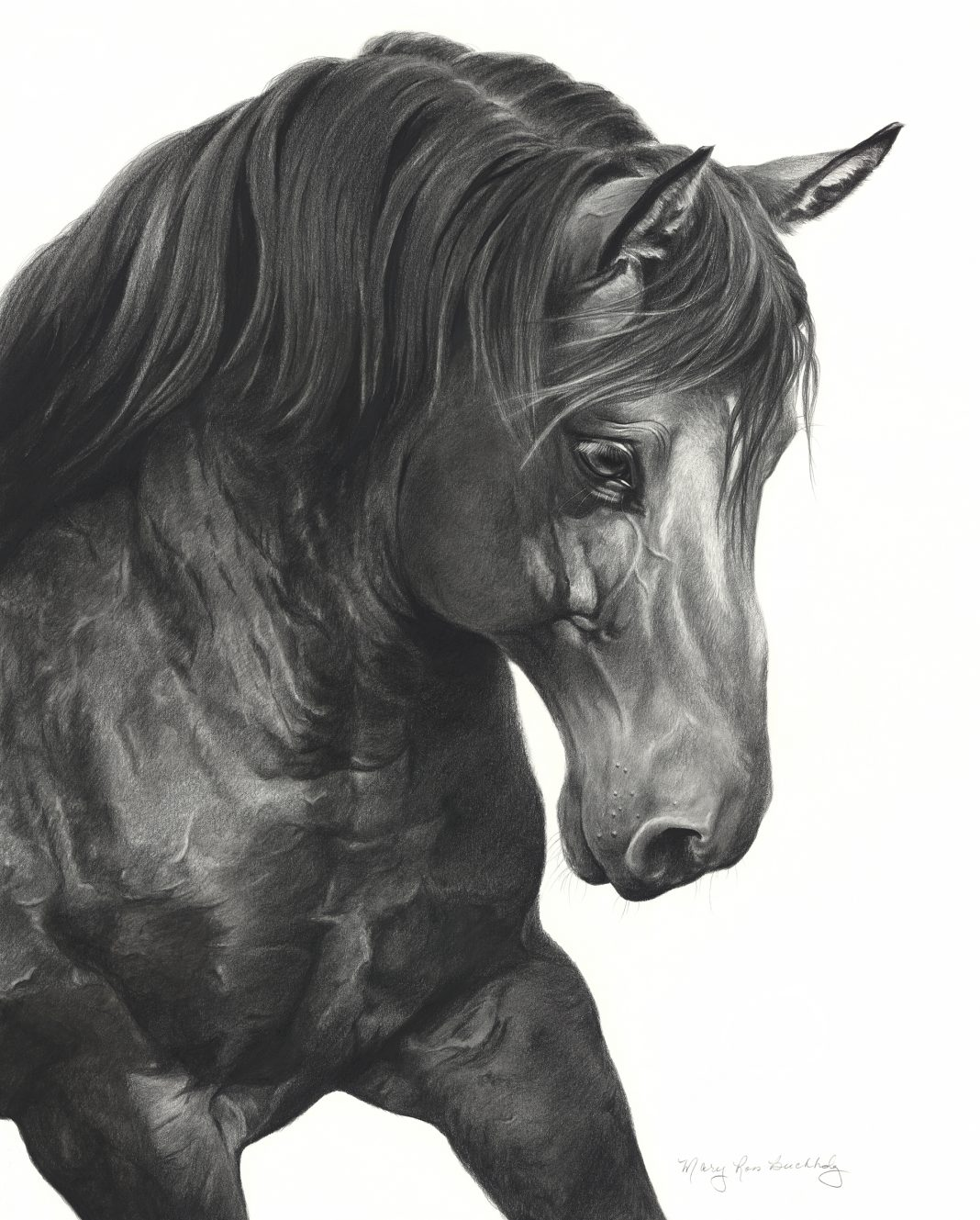 Mary Ross Buchholz Belgian Beauty horse equine pencil drawing western painting