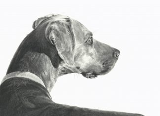 Mary Ross Buchholz Checking The Wind dog pencil drawing western painting