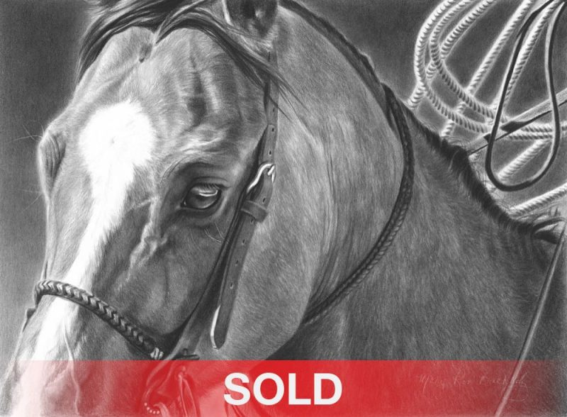 Mary Ross Buchholz Good Boy charcoal graphite drawing horse portrait western painting sold