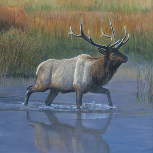 Terry Isaac Elk Crossing original wildlife painting