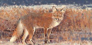 Jim Morgan Moonlight Mouser fox wildlife oil painting