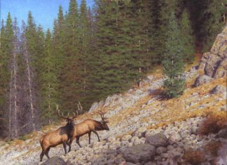 Claudio D'Angelo High Country Traverse elk mountain wildlife oil painting