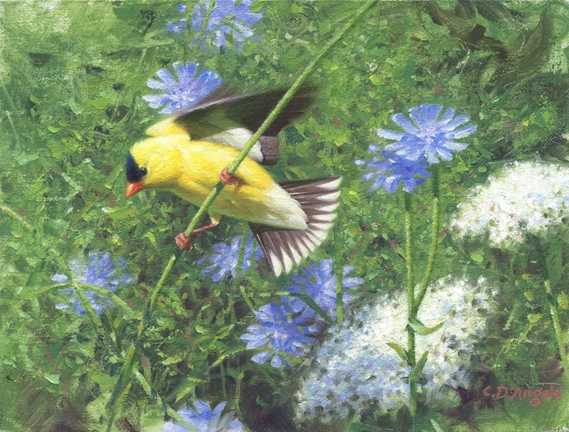 Claudio D'Angelo A Delicate Balance bird goldfinch wildlife oil painting