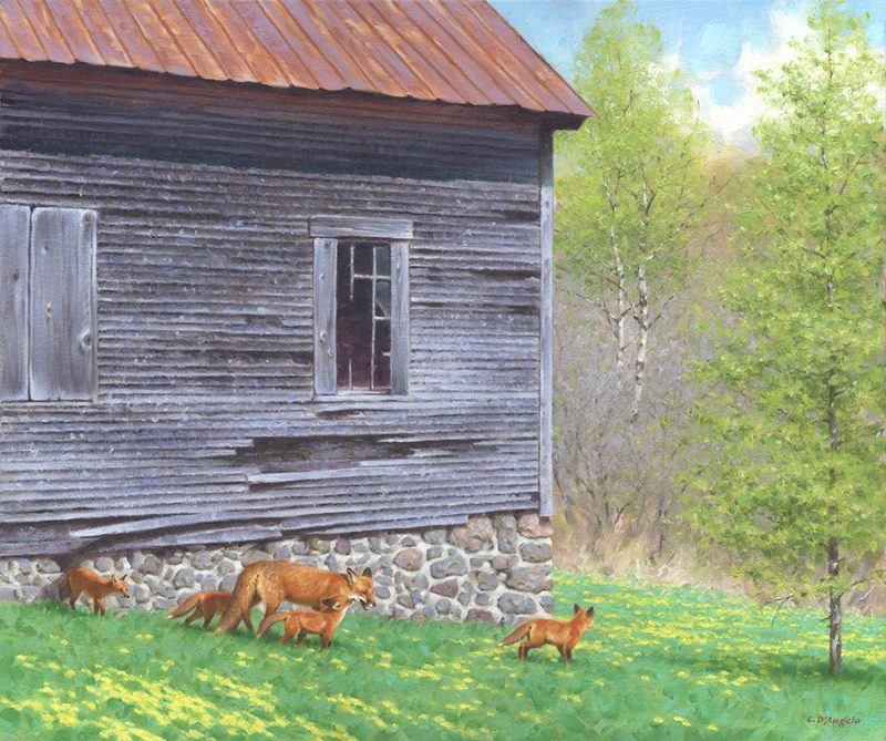Claudio D'Angelo The Sold Scholl House Fox Family wildlife oil painting