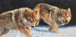 Bonnie Marris The Chase wolves snow running hunting prowl original wildlife oil painting